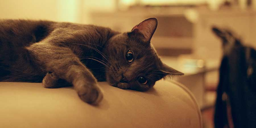 Black cat laying down on a beige couch