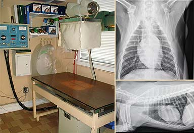 Larchmont Animal Hospital operating room. Picture of operating table and xrays