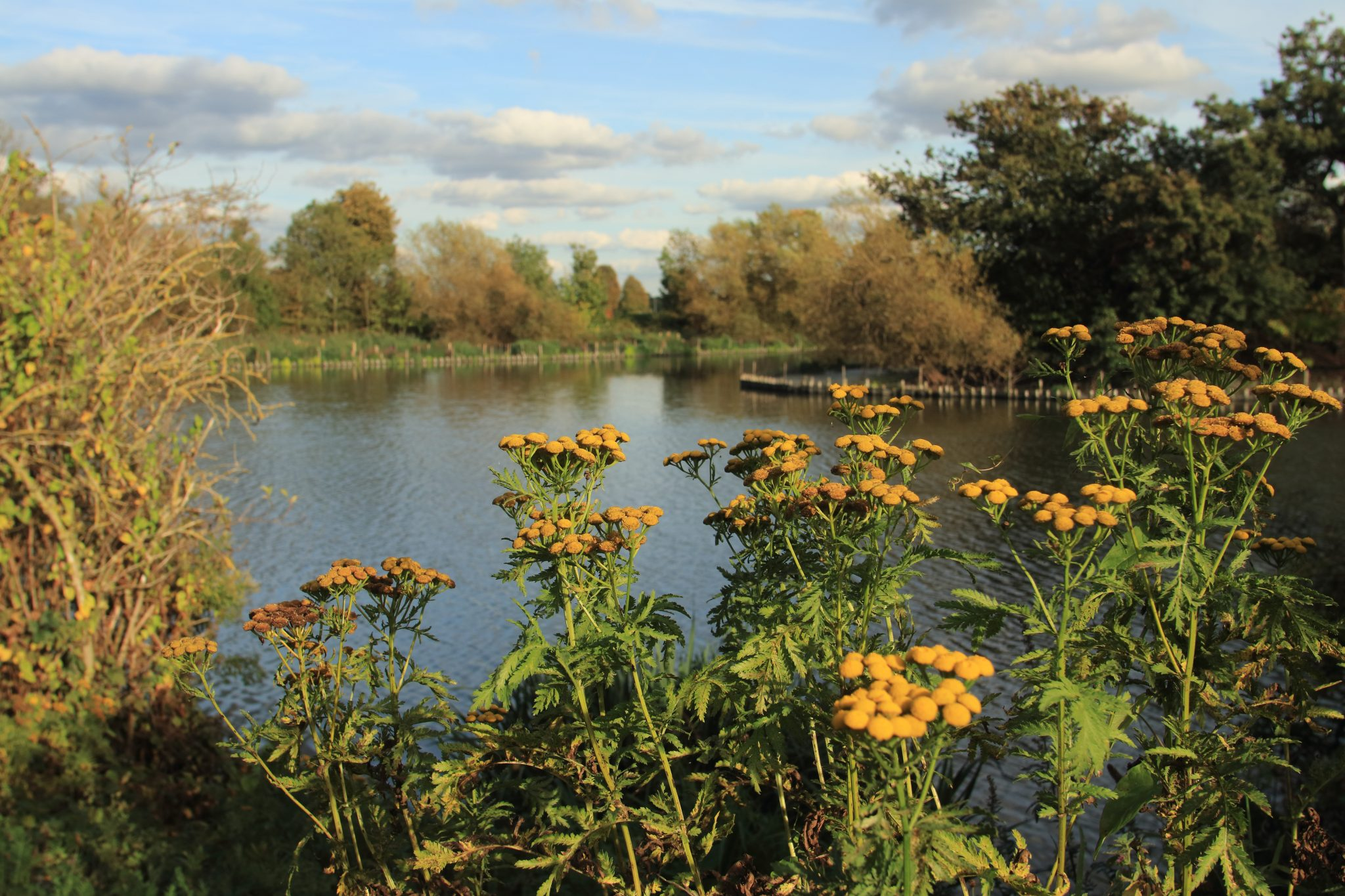 The Larder at Walthamstow Wetlands