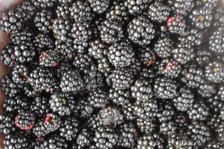 Blackberry and lemon posset 006