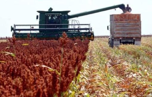 Construirán primer planta de biocombustibles a base de sorgo