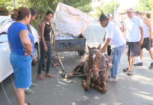 Cárcel a quien maltrate equinos