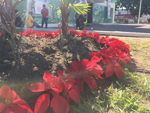 Municipio compra flores y hace más despidos