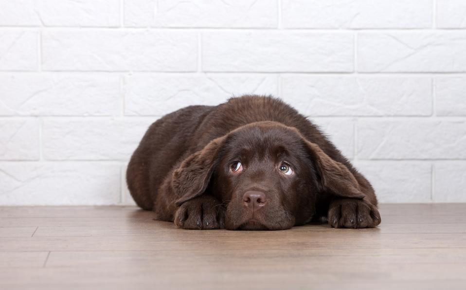 Posadas 2019: cuetes y cómo evitar que afecten a tu mascota