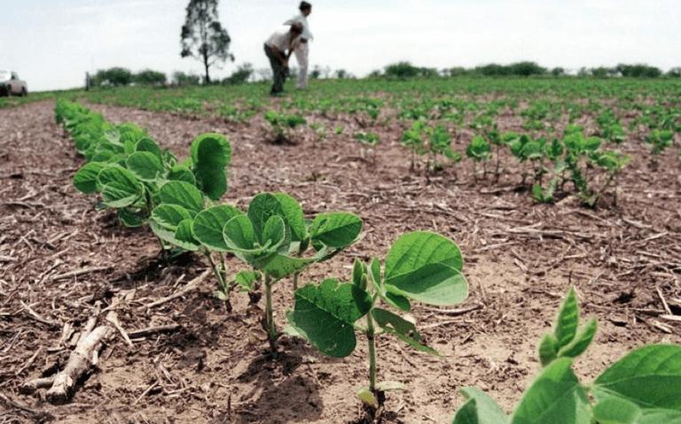 Campesinos dejarán de producir sorgo y soya