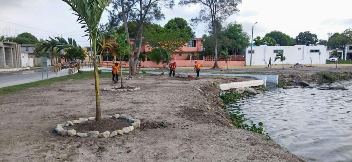 Ayuntamiento de Madero promueve acciones de reforestación