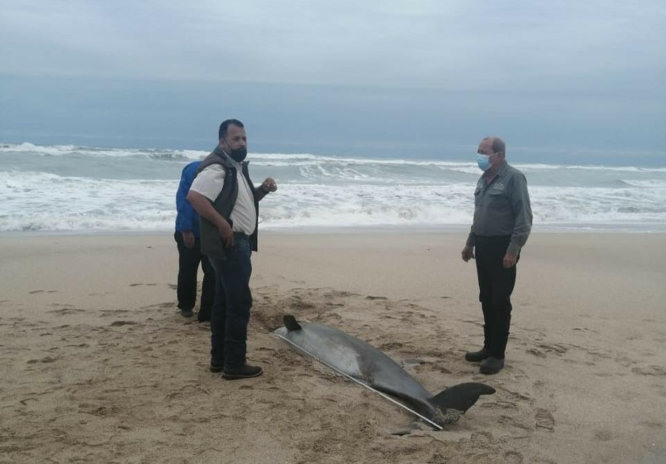 Contaminación y redes ilegales acaban con delfines de Miramar