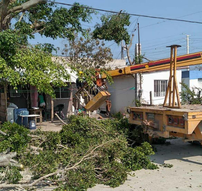 Realiza bomberos poda de árboles para evitar accidentes