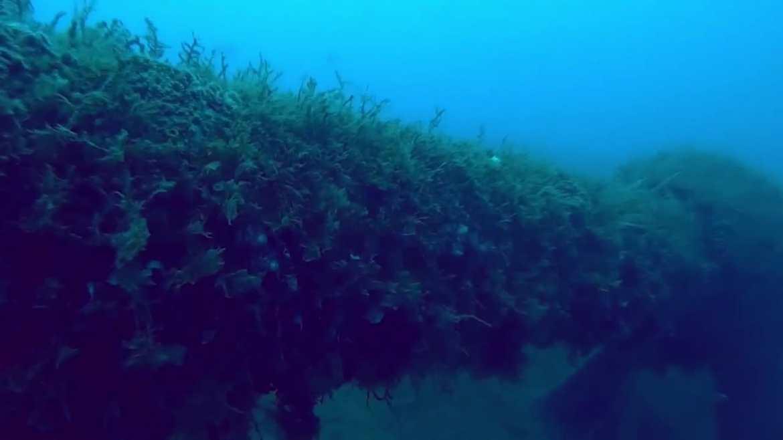 Madura arrecife artificial frente a Playa Miramar