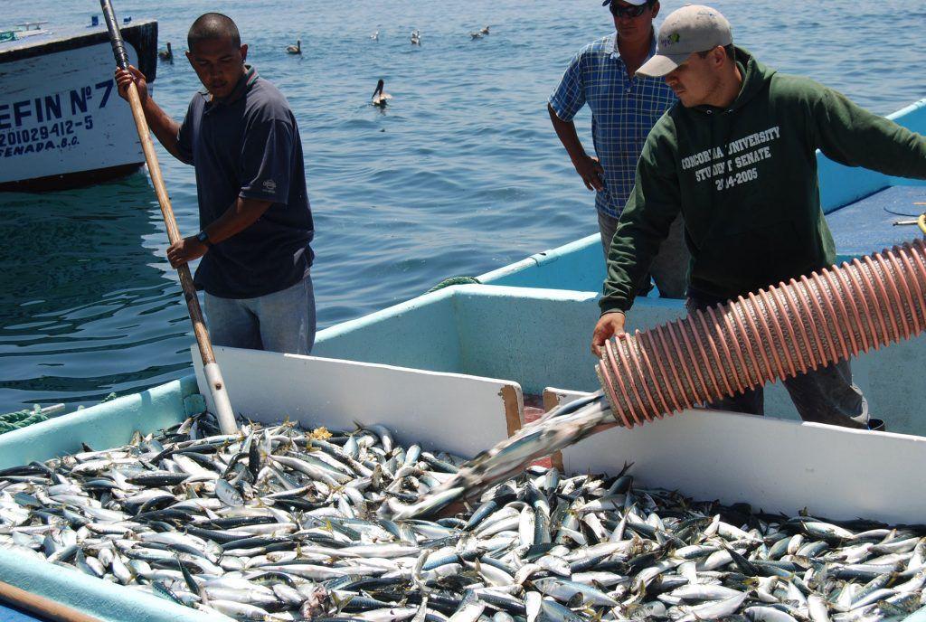 Pescadores esperan mejore su economía con captura del pez Sierra
