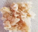 Chopped Fresh Horseradish