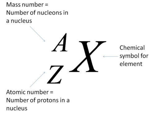 111 C Describe The Contribution Of Protons And Neutrons To The