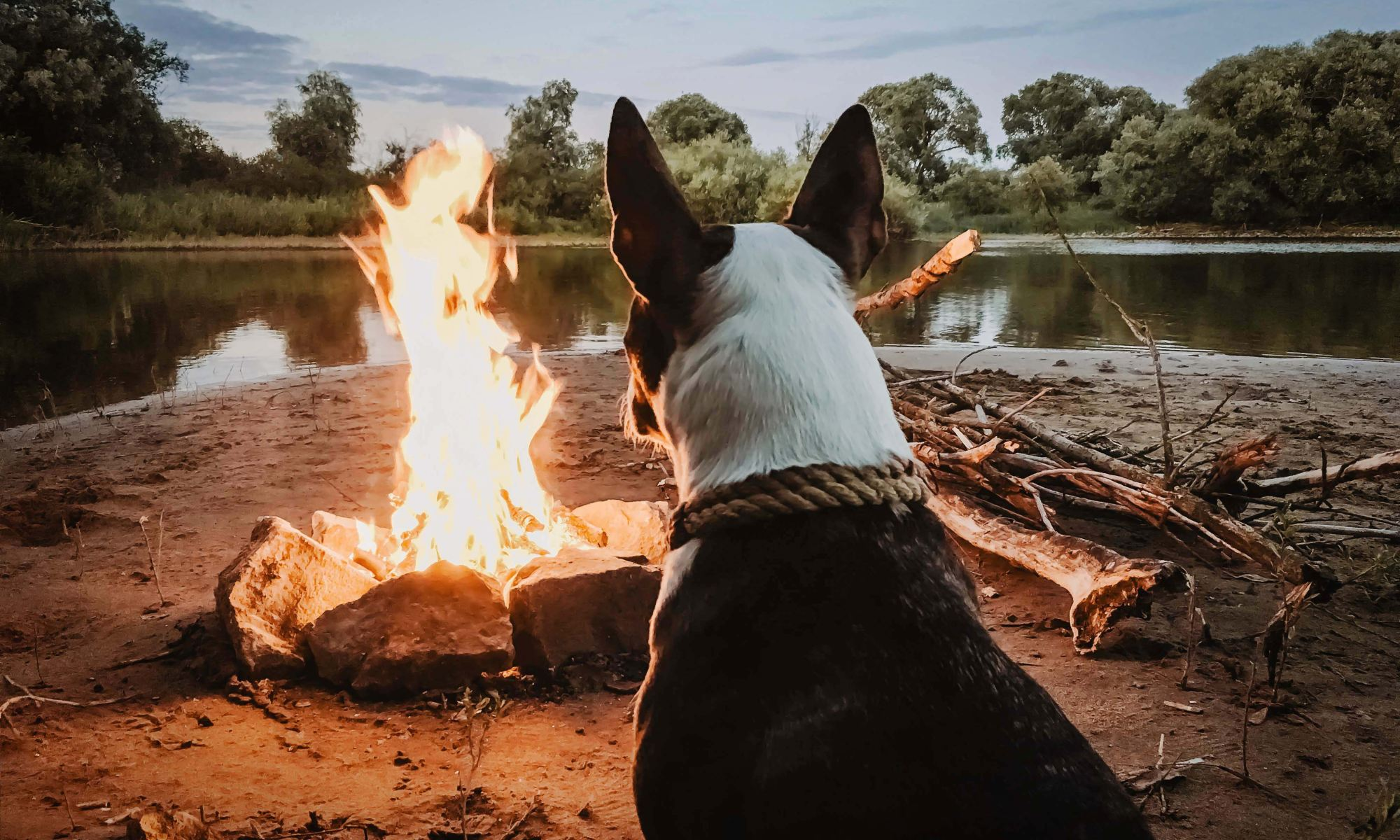 Dog sitting in front of a camp fire on a beach