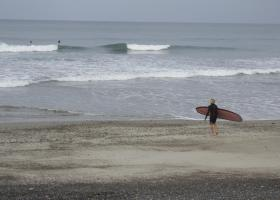 Surfers going out to an enjoy a morning surf at T-street despite the recent shark sightings.