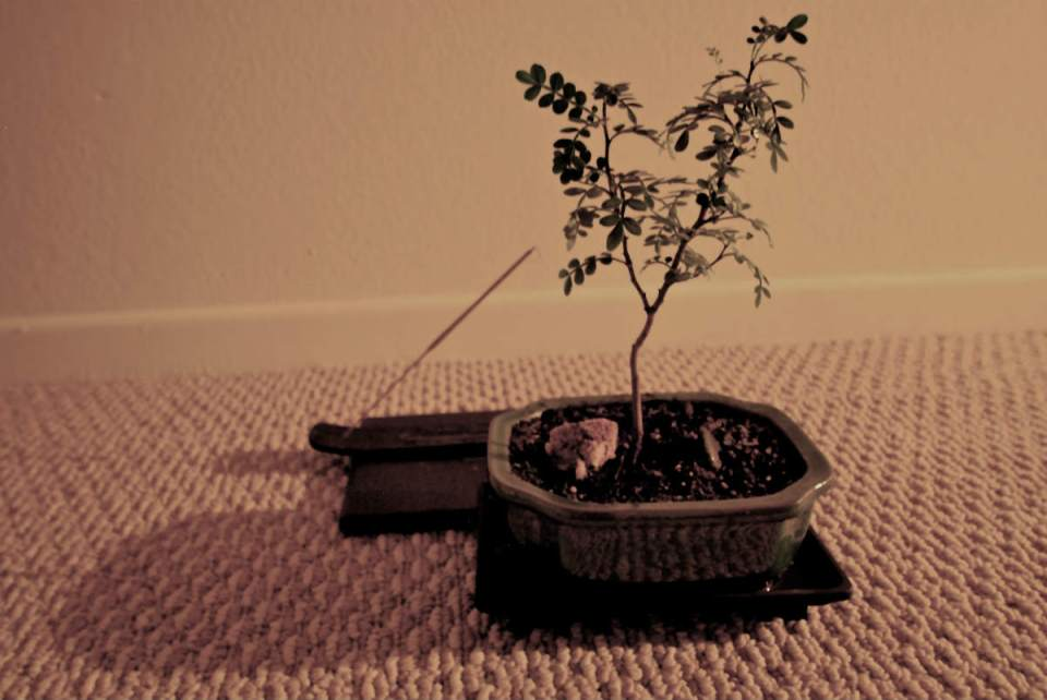 Plants and incense are often used for the meditation process. (Betsy Johnson/Photo Editor)