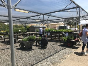 Students in the horticulture and landscape design department at Saddleback College help out at the biannual Plant Sale (Marie Christner)