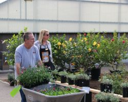 Horticulture Laboratory Technician Tina Maldini and guest gaze over some Saddleback College's plant sale (Joseph Fleming/Lariat)