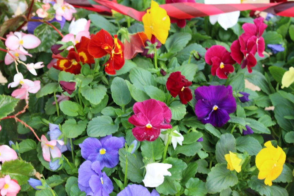 Lively, vivid colors can be found at Saddleback College's plant sale (Joseph Fleming/Lariat)