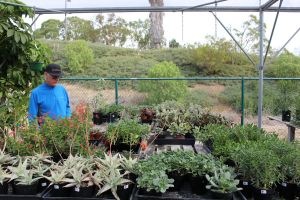 Visitors explore all that the Saddleback College Greenhouse has to offer (Joseph Fleming/Lariat)