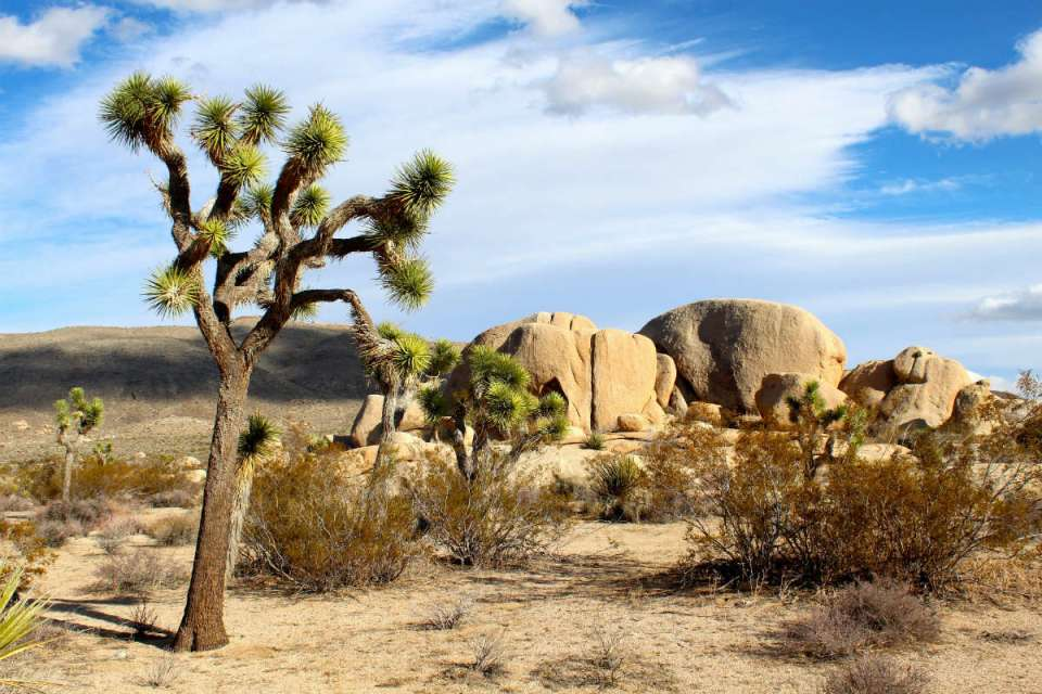 Joshua Tree National Park (Good Free Photos)