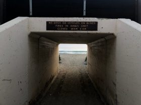 San Clemente dog ban lift: good for people, or bad for the environment?