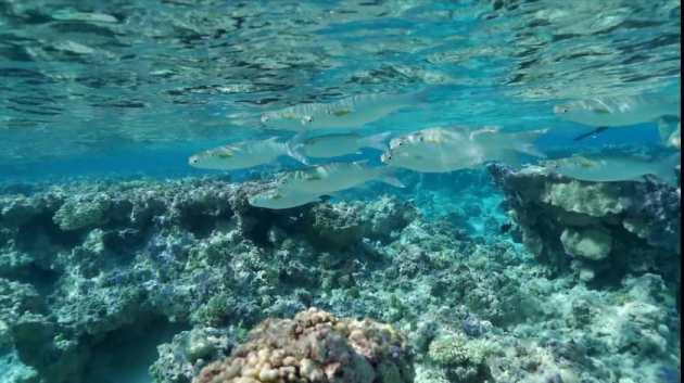 Il mare della polinesia francese