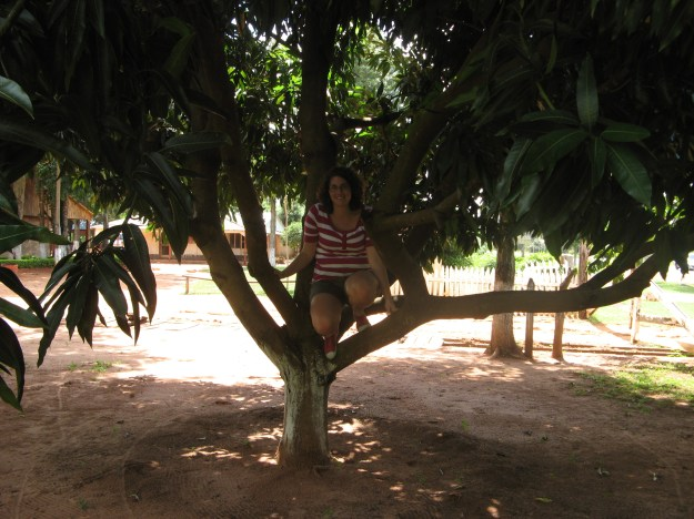 Me in a mango tree! I was very sad we went at the end of the fruit's season.