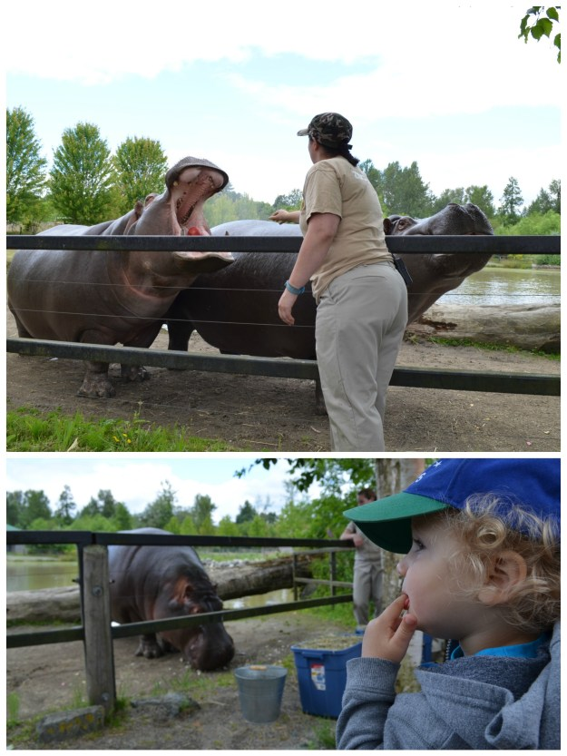 The hippo feedings were the best part of the trip for me.