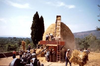 La Battitura del Grano in Valdichiana