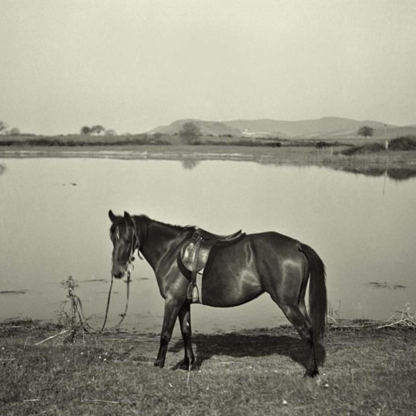 Cavallo in Maremma, San Donato, Grosseto, 1934.