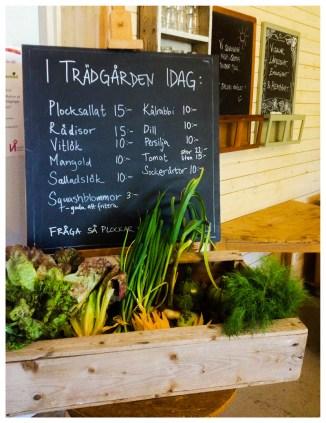 Fräscha nyskördade grönsaker finns att köpa på Lärjeåns Kafe & Trädgårdar. Foto: Lydia Söderberg.