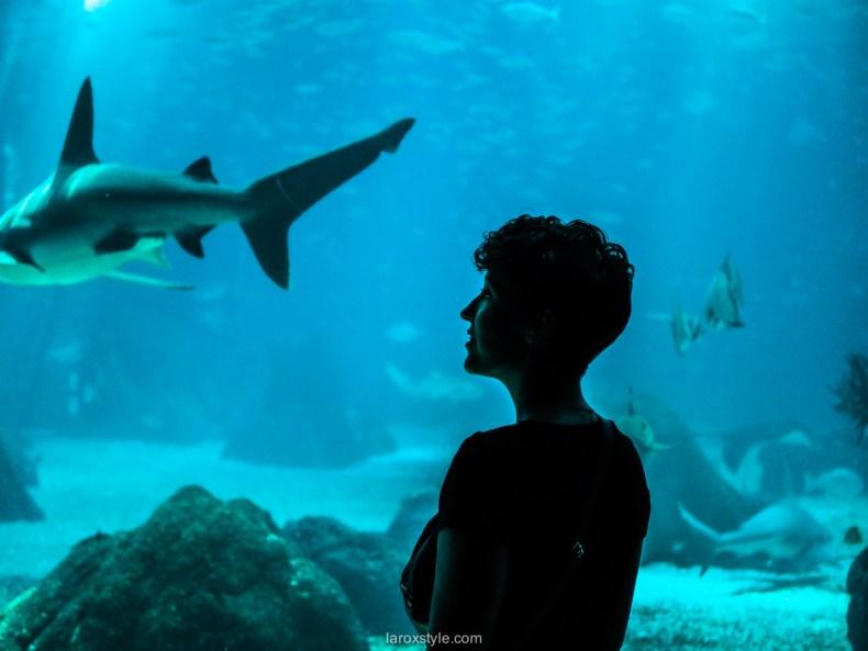5 lieux a ne pas manquer a Lisbonne - oceanarium de lisbonne -