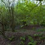 Oakraven Woodlands