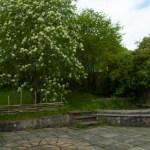 Garden and Pond