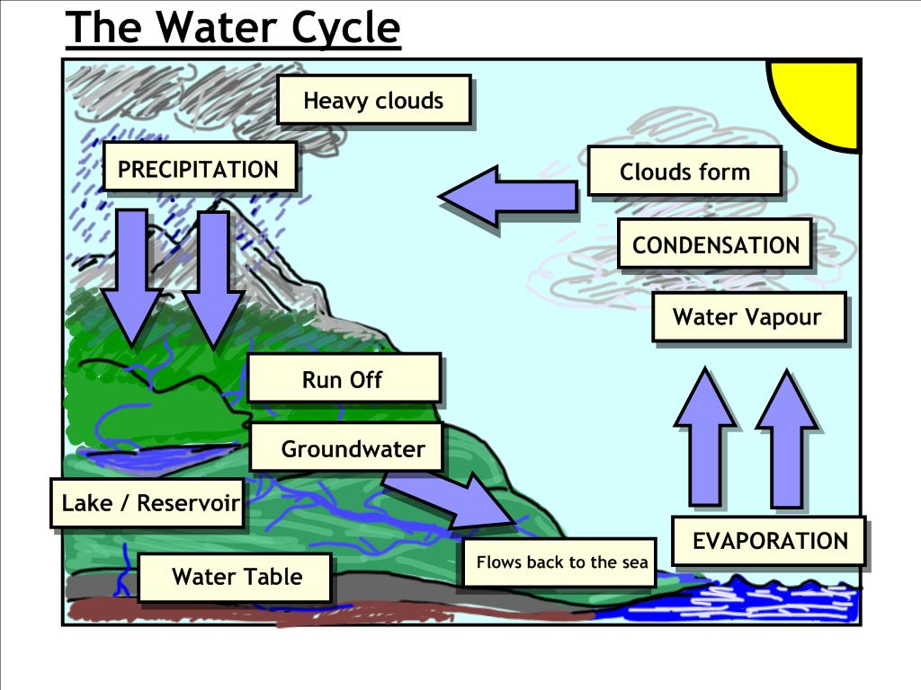 Images Of Water Cycle For Kids