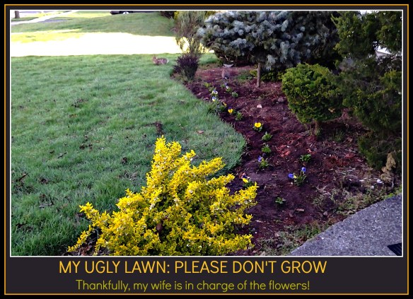 My lawn - after the lawn was mowed