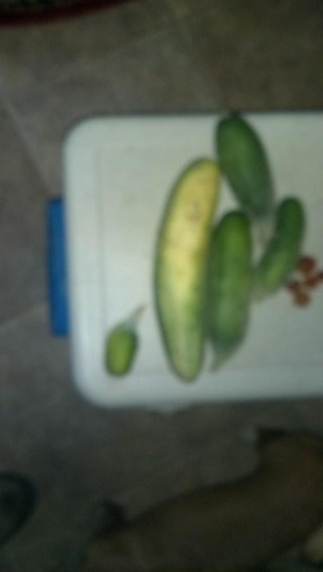 816 food 1