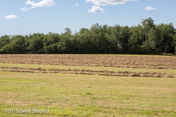 farm field ready to produce bales of straw