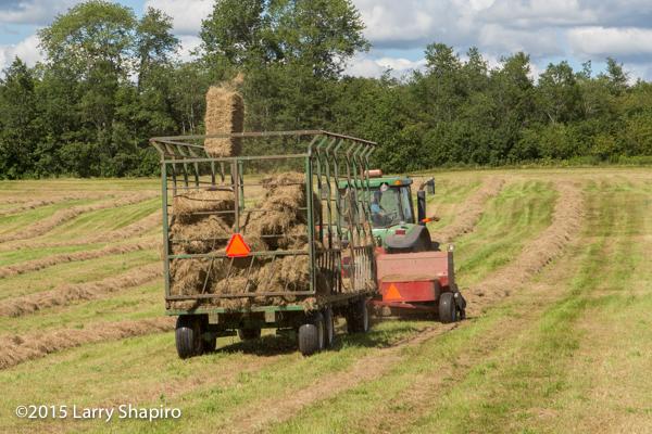 automatic baling machine creates straw bales