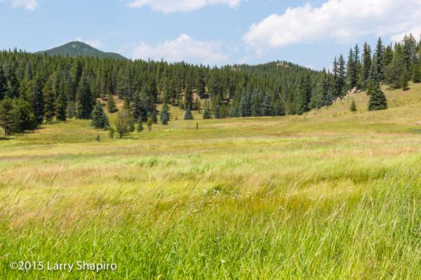 tall prairie grass in Staunton State Park