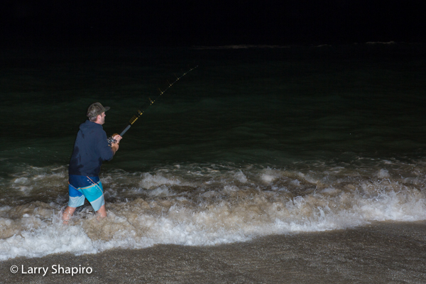 Fishing for sharks from the Palm Beach, FL beach at night