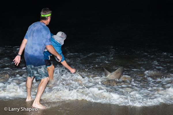 grabbing a shark along the beach at night