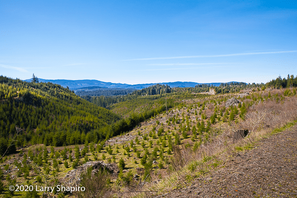 scenic Oregon view with replanted forest
