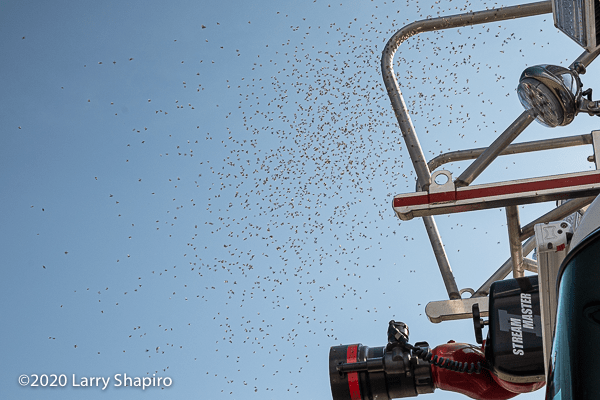 a swarm of flying ants