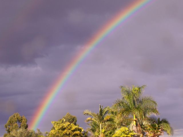 rainbowoverpalms2