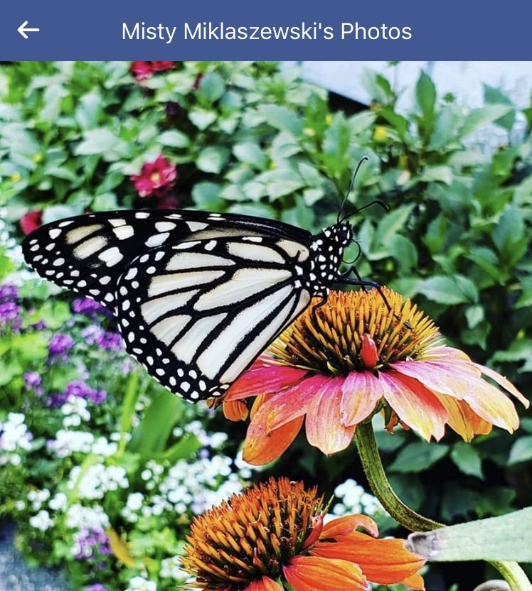 photo of butterfly sitting on flower