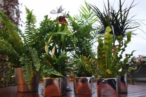 plantes-dépolluantes1