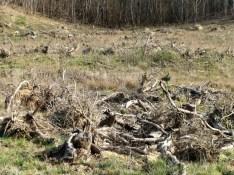 Reste d'une forêt emportée à la hâte _ Sivens