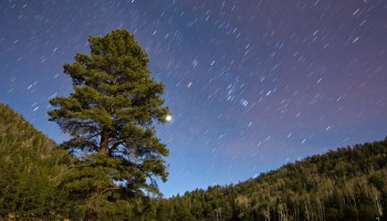 Lockett Meadow by Moonlight