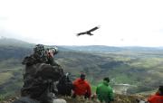 Condores en Patagonia